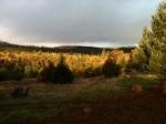 View from thebackyard