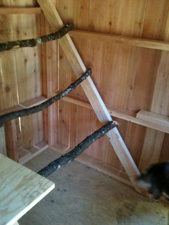 Roosting Ladder