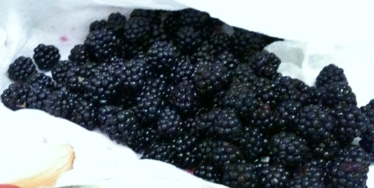 The stars of the show....Wild Blackberries!