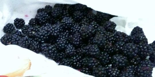 The stars of the show....Wild Blackberries!