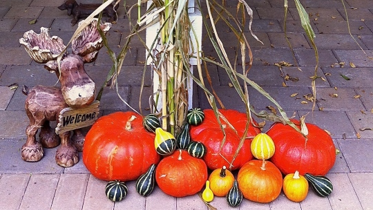 That red of the pumpkins are their true color!!  Beautiful!
