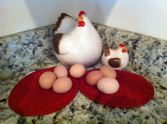 Seven chickens, seven eggs...life is good!