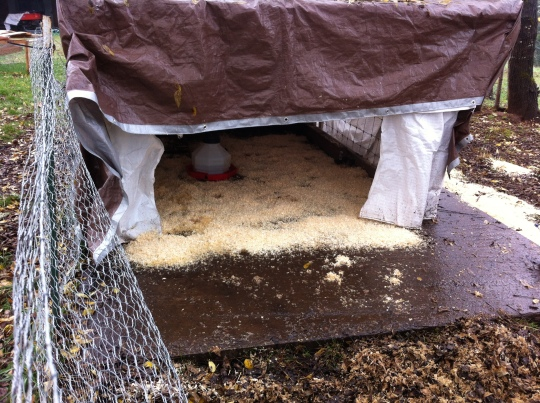 I feel good that our chickens have a dry place to go from the rain.