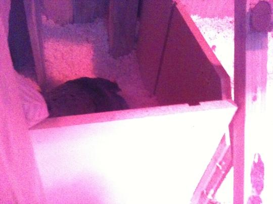 New nesting box.