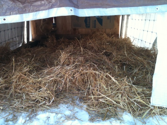 A big pile of straw to play in.