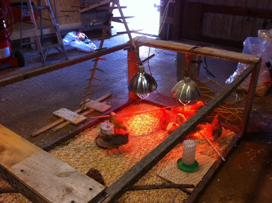 An old TV antenna provides the support for a heat lamp.