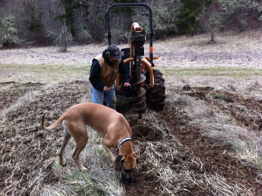 Rocky, muddy soil...use a post hole digger to plant 300 fir trees!!