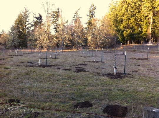 An orchard full of 4 types of apple trees, and 2 types of pear.