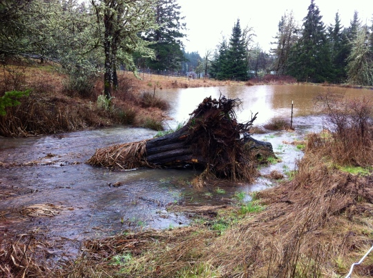 A tree stump overtaken by the water running into the pond.