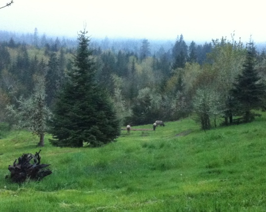 The Elk have returned!!
