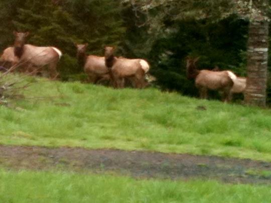 Elk 2013