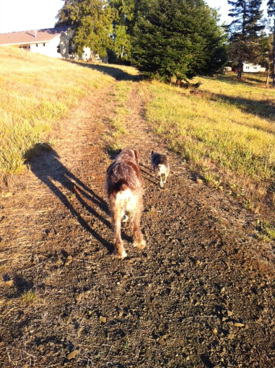 The dryness of a late summer walk with Tucker & Karli.