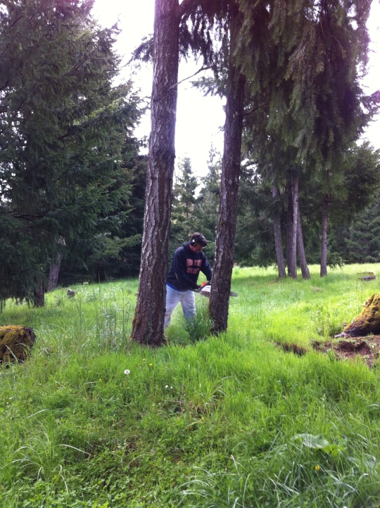 My man, Tony, taming the forest!