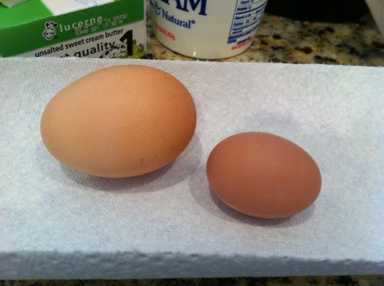 Who laid the egg on the right???
