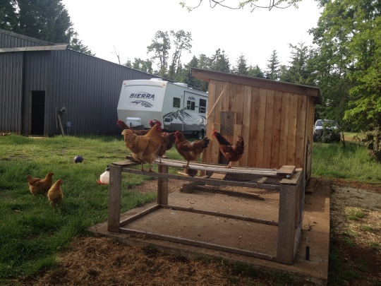 The outdoor brooder...now a roost...maybe we need more chickiepoohs! ;)