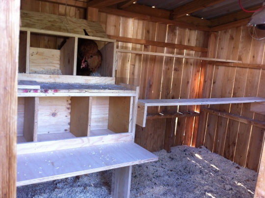 New nesting boxes + new roosting boards = happy campers.