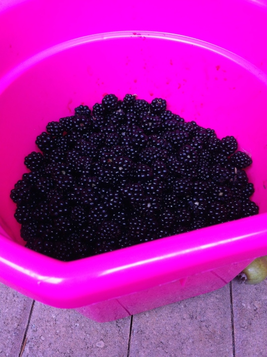 Bucketful of Blackberries