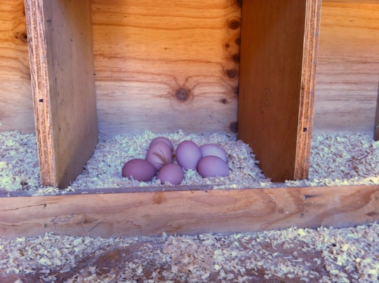 Six nesting boxes....this one was the hot spot today!!