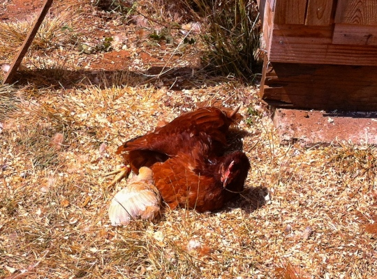 Mama and Chick catching some rays.