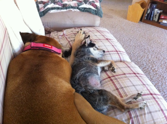 My sweet girls, Penni and Karli !