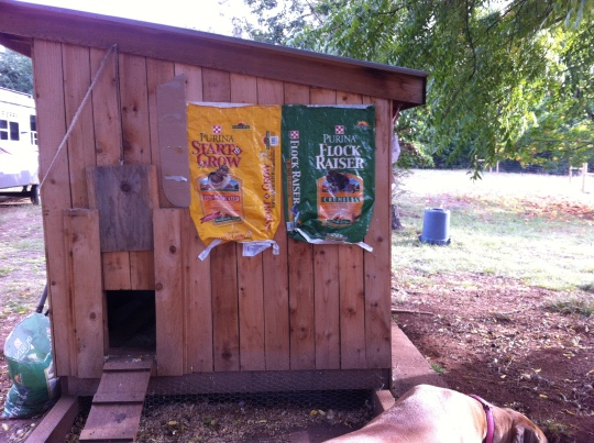 "The UPS guy told me that that was the most ""Red Neck"" chicken coop he's ever seen...hahahaha!"