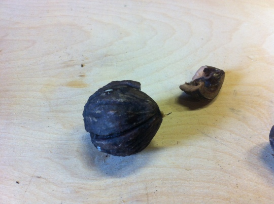 Black Walnut 2014