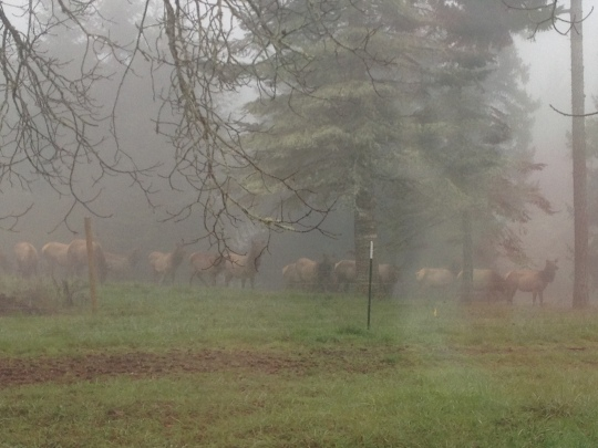 The Elk are early this season!