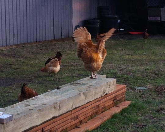 Chicken Wings 2014