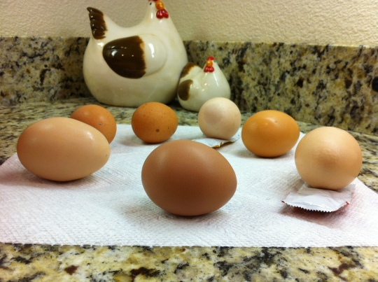 A Symphony in Eggs