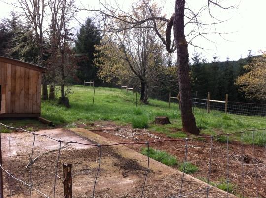 Goat Yard 2015
