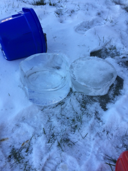 Our goats frozen water buckets were a constant threat throughout the first 5 days of January.
